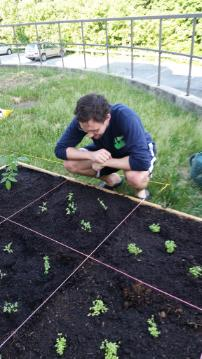 Devin Stephenson watches the snow peas grow.